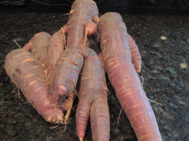 Heirloom Carrots from Gazy Brothers Farm